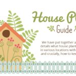 How to Keep Houseplants Alive – Infographic